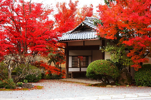 Rengetsu crimson leaves at jinko-in